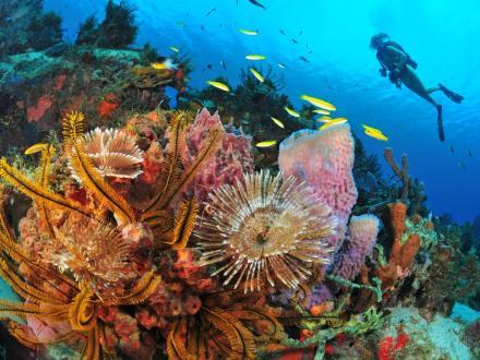 5 spots de plongée en Martinique