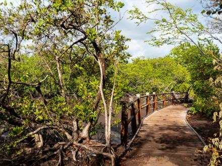 Randonnées phares en Martinique