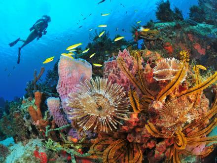 La Plongée en Martinique