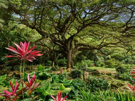 Guide des Vacances Écolo en Martinique